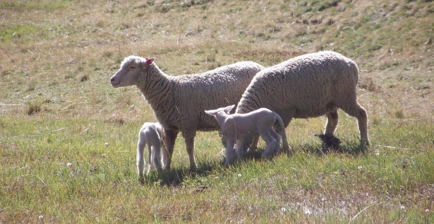 Pourquoi la laine se porte 10 mois par an ?